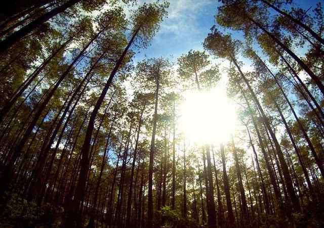 Taman Hutan Jaya Giri Lembang
