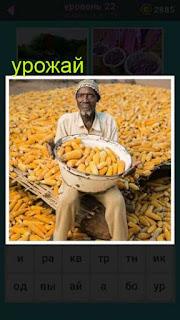 мужчина в руках которого большой урожай кукурузы и вокруг него