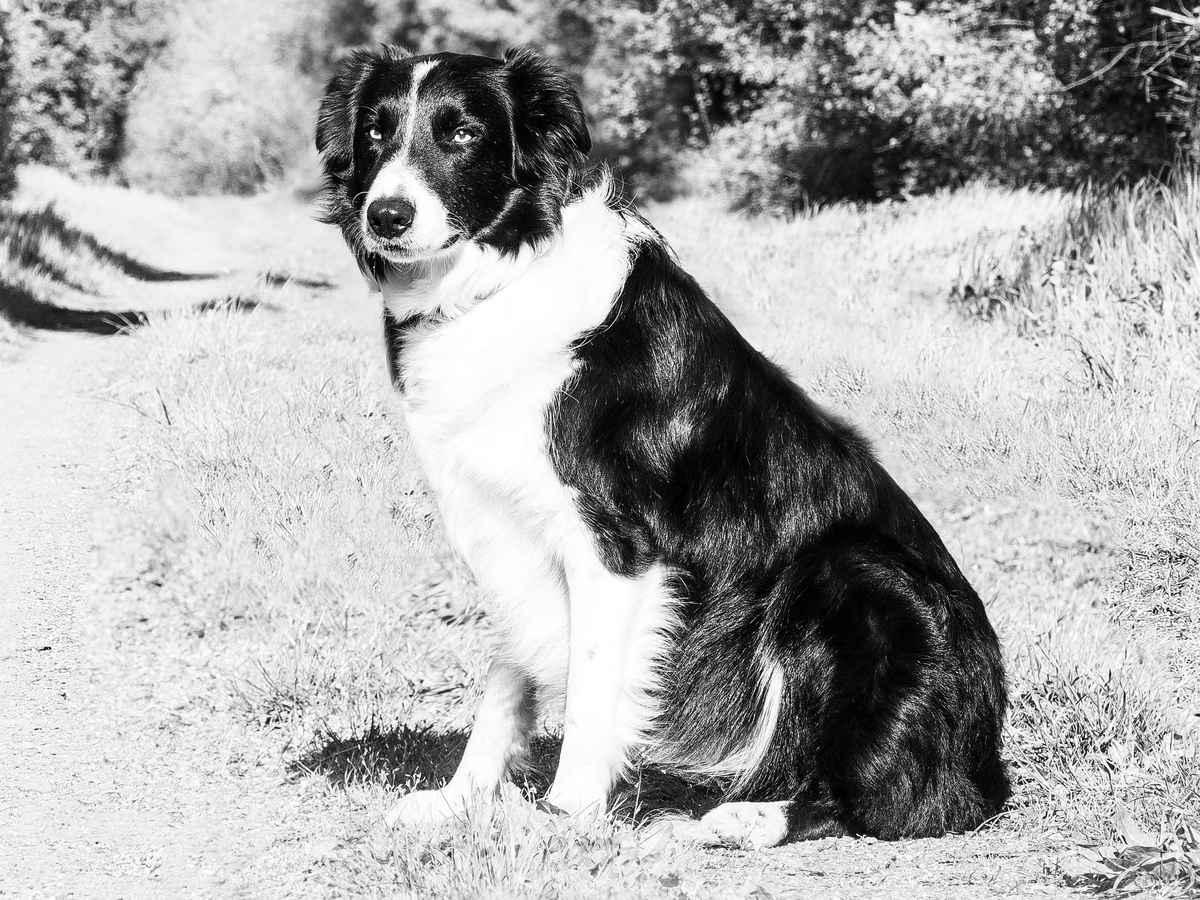 Обращение со служебными собаками в таможенных органах