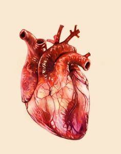 ब्लड प्रेशर कैसे मापा जाता है - How to Measure High Blood Pressure
