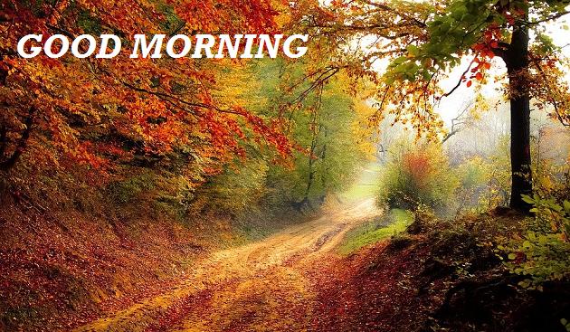 good morning scenery nature hd