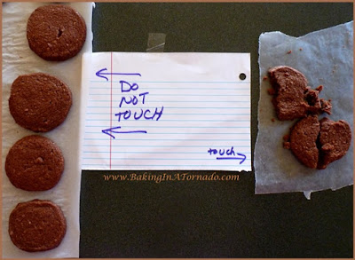 Fly on the Wall: don't touch the cookies | www.BakingInATornado.com | #family #humor