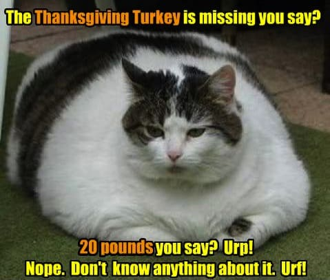 turkey memes