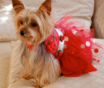 Crimson Princess Red Dog Party Dress