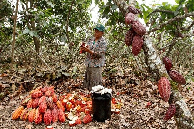 Rutas turísticas de Guayas – Ruta del Cacao