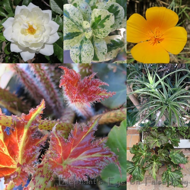 Exotic plants from China, New Zealand, California ...  We are all in this pandemic together