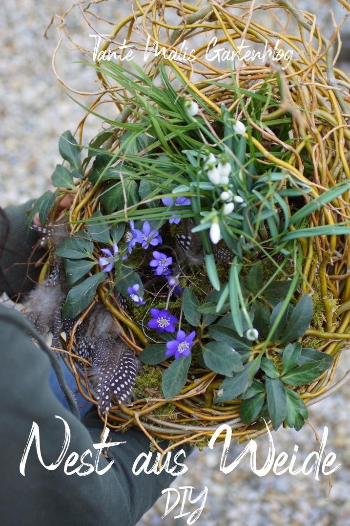 Bepflanztes Weidennest mit Leberblümchen, Schneeglöckchen, Gras