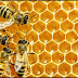 Mέλισσες: Εκπαιδεύονται σαν…σκύλοι και αυξάνουν την παραγωγή καλλιεργειών