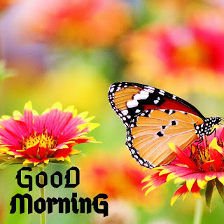 good morning love photo images wallpaper with quotes free download hd
