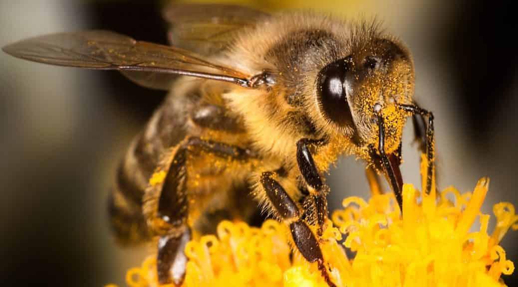 Μία Μέλισσα Έπεσε στο Μέλι. ΕΚΕΙΝΟ που Συνέβη στη Συνέχεια Είναι Εκπληκτικό (video)