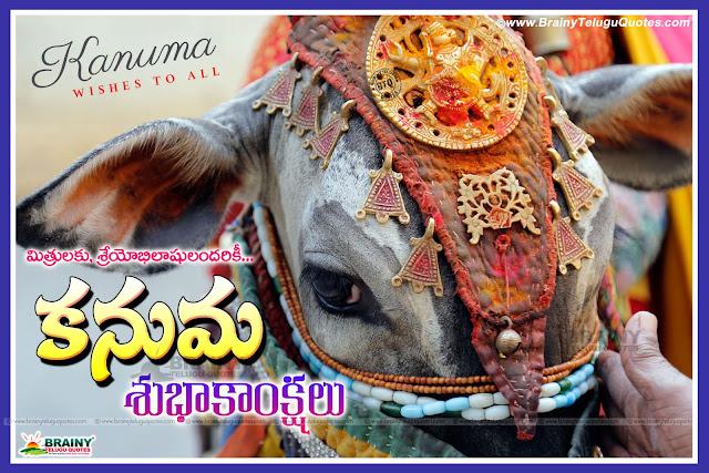 Kanuma information in Telugu, Telugu kanuma festival Significance and importance