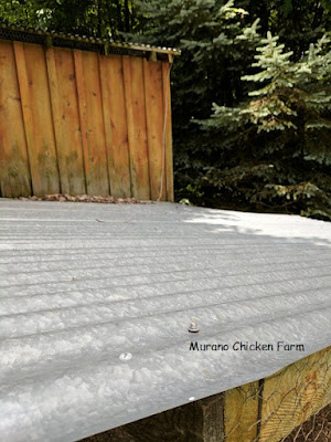 Metal covered run on chicken coop.
