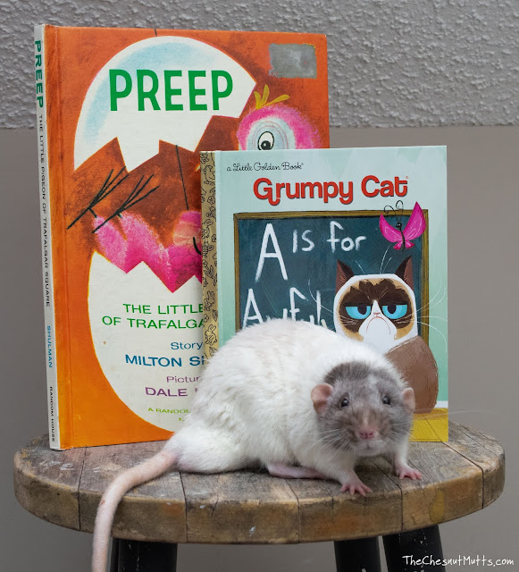 Vincent the Therapy Rat with donated books