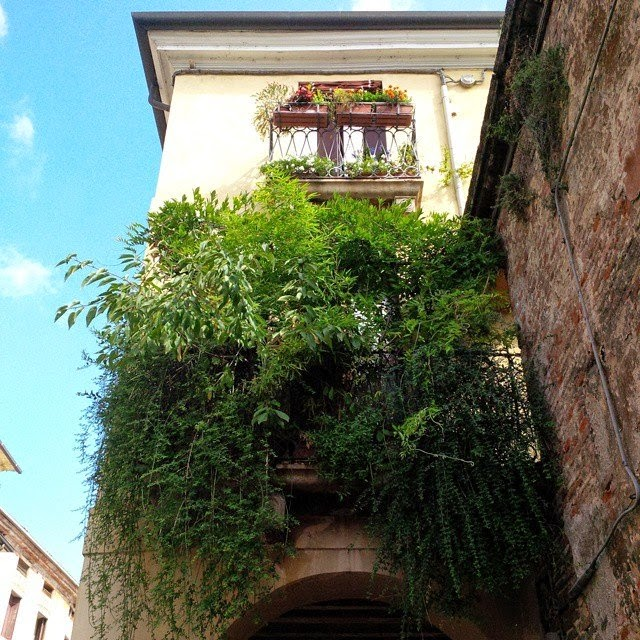 An urban jungle balcony in Vicenza, Italy