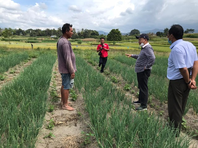 Petani Cabai dan Bawang Merah Diimbau Waspadai Curah Hujan Tinggi