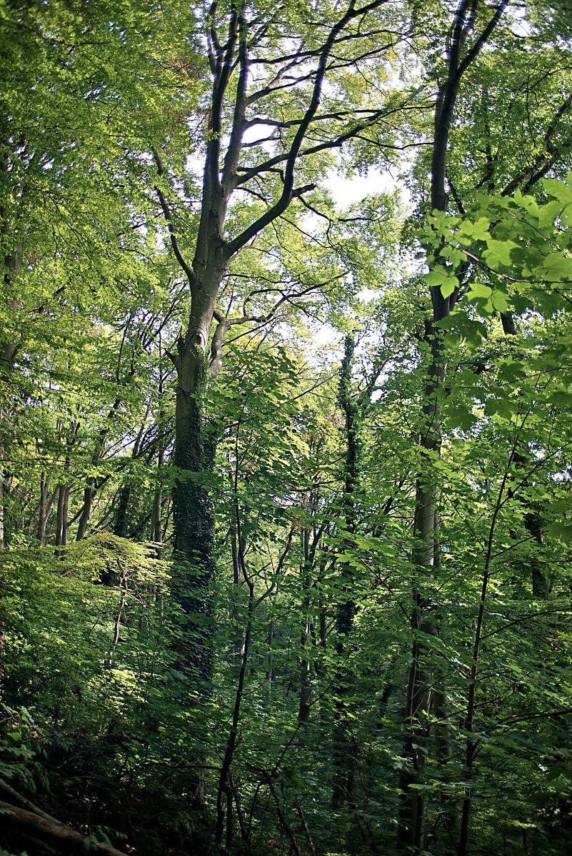 #284 Tamron BBAR MC02B f2.5 28mm –  Wald sich selber überlassen