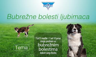 Bubrežne bolesti ljubimaca - Panvet veterinarska stanica