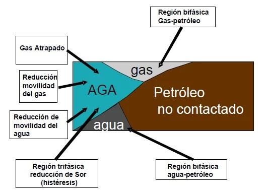 Zona trifásica y mecanismos AGA.