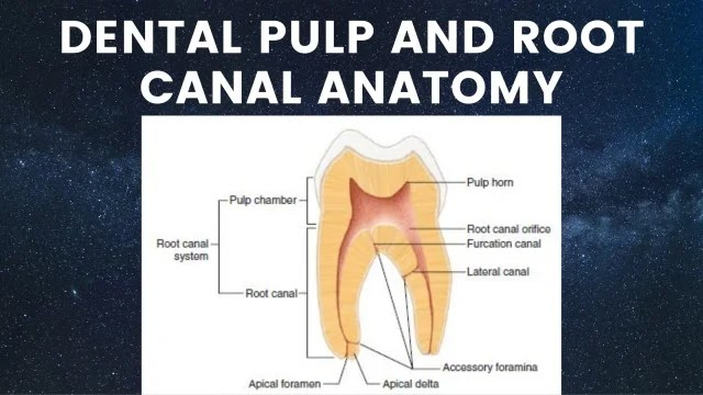 Dental Pulp and Root Canal Anatomy