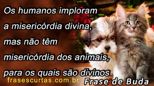 Os humanos imploram a misericórdia divina, mas não têm misericórdia dos animais, para os quais são divinos
