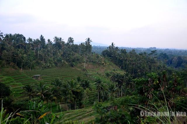 Jatiluwih terrazas de arroz bali