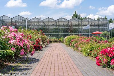 Powsin ogród botaniczny PAN oranżeria