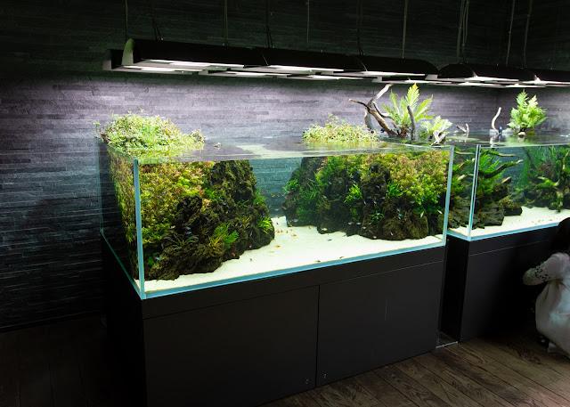 sumida aquarium Takashi Amano aqua design amano
