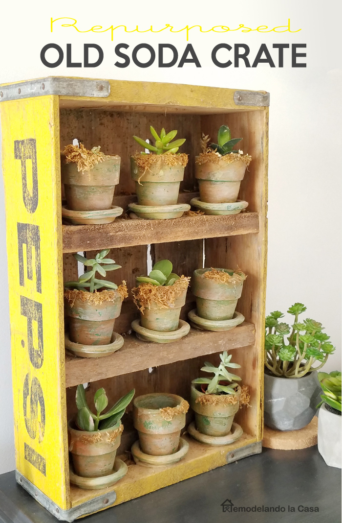 yellow Pepsi soda crate repuurpose as succulent garden with 9 little terracotta planters