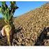 Γ. Καρασμάνης: Να εξοφληθούν άμεσα οι τευτλοκαλλιεργητές για την περυσινή χρονιά.