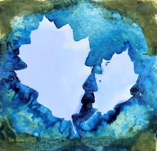 Wet cyanotype_Sue Reno_image 842