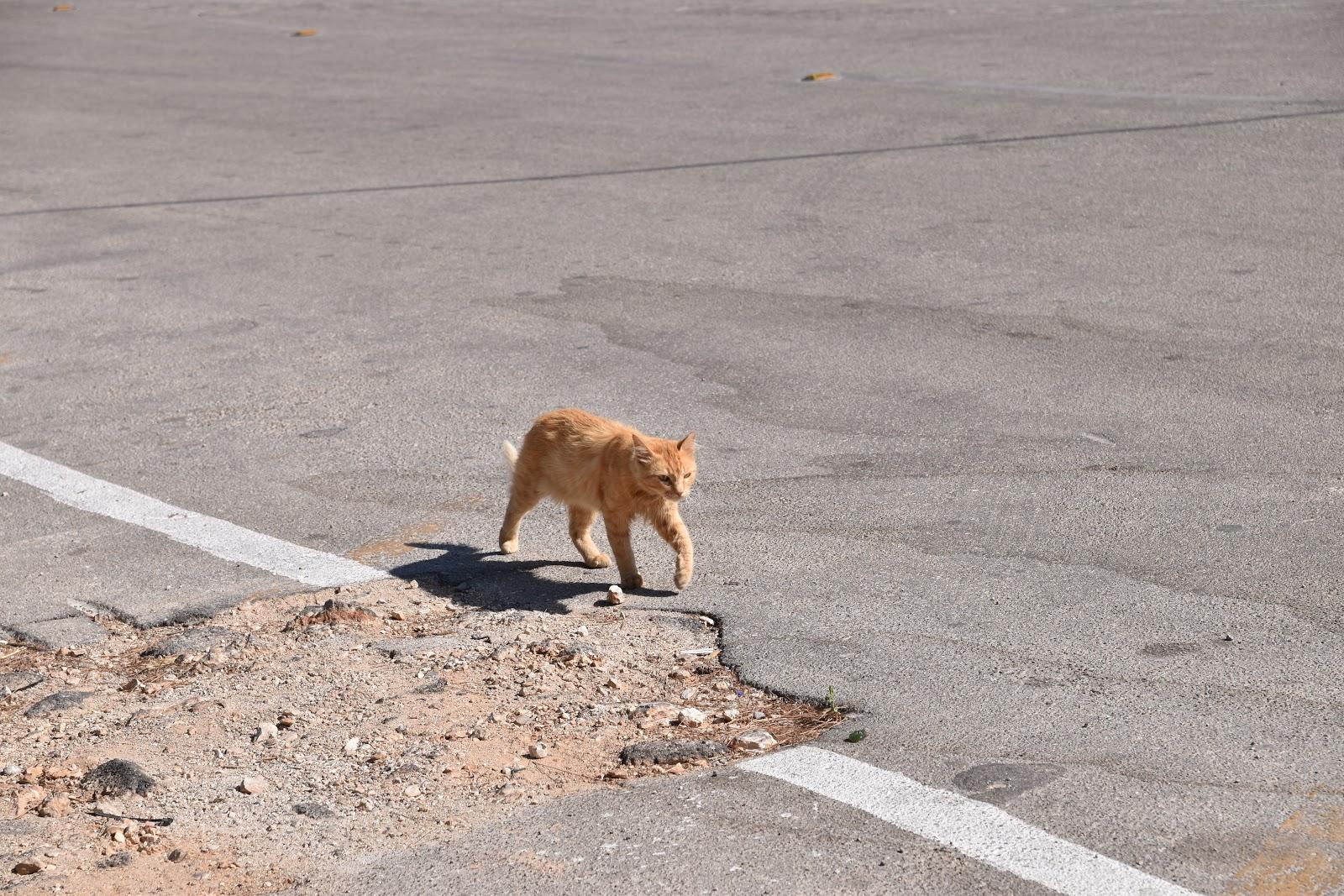 toulavé kočky v Řecku