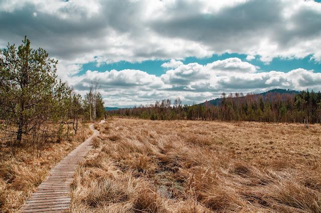 Rundweg im Säumermoor - Soumarské rašeliniště | Wandern im tschechischen Böhmerwald | Nationalpark Sumava | Soumarský Most | Wandern Šumava 01