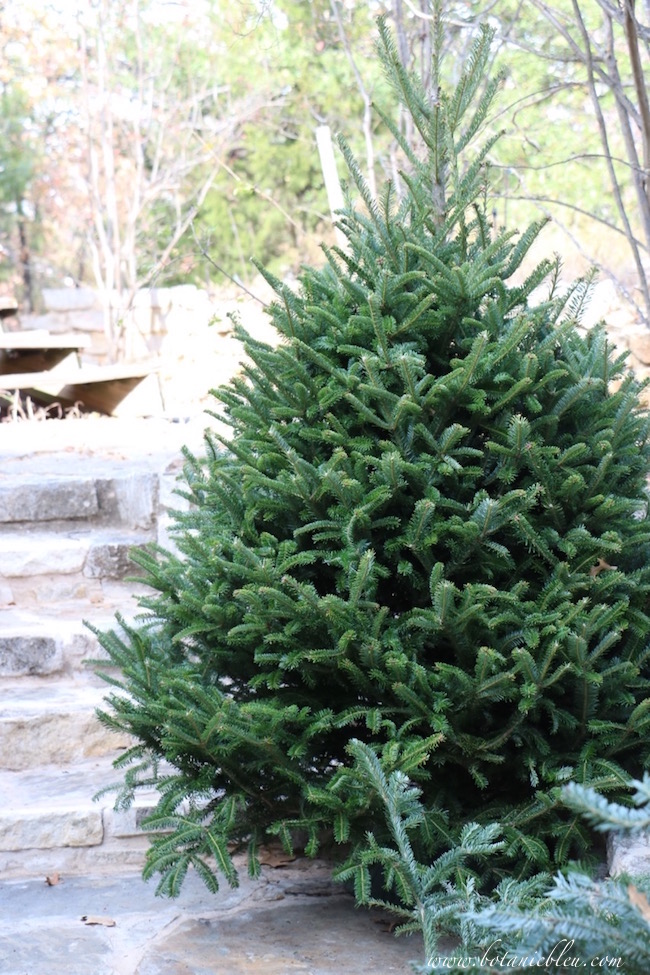 undecorated-exterior-christmas-tree-visible-inside