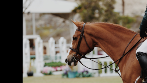 Write What You Know: Horses III // Saddles & Bridles