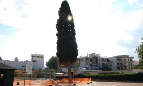 Ανακοίνωση του Δήμου Άργους Μυκηνών για το κυπαρίσσι