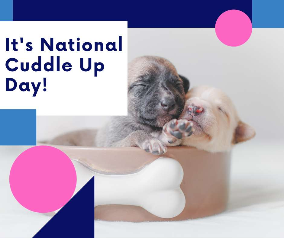 National Cuddle Up Day Wishes Awesome Images, Pictures, Photos, Wallpapers