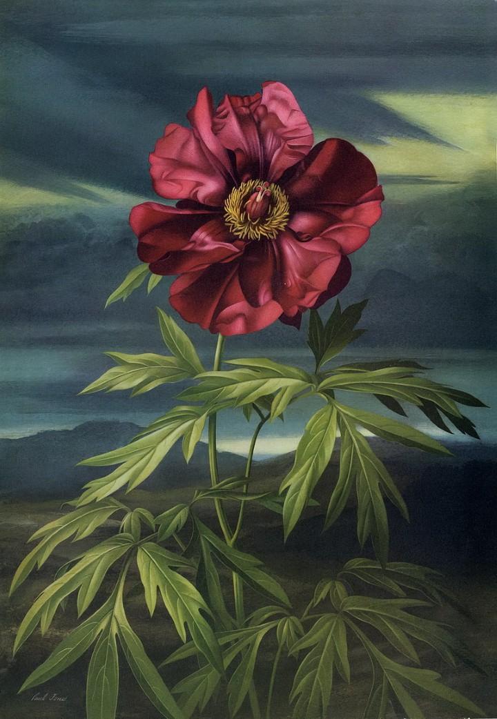 Paul Jones. Акварельные рисунки цветов 27