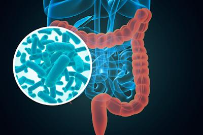 Antecedentes microbiota definición