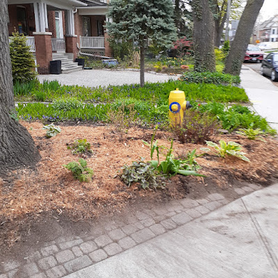 High Park North Spring Cleanup and Makeover After by Paul Jung Gardening Services--a Toronto Gardening Company