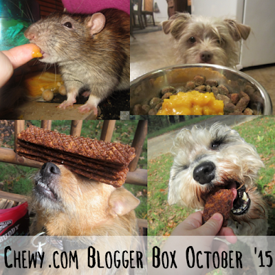 Delmar, Bailey, Jada, and Dibble enjoying some goodies from Chewy.com
