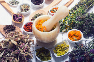 Top 10 Medicinal Herbs And What They Treat