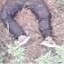 Corpo é encontrado decapitado em Feira de Santana