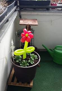 Einfache Ballonblume rote Blüte grüner Stiel.
