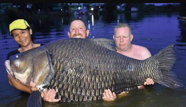 Tidak bisa disangkal bila di pikiran tiap orang tentu ada kemauan menjadi pekerja yang man Ikan Mas