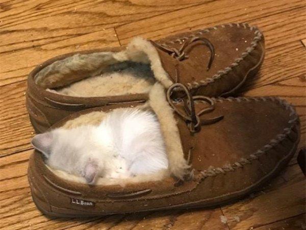 уставший котик