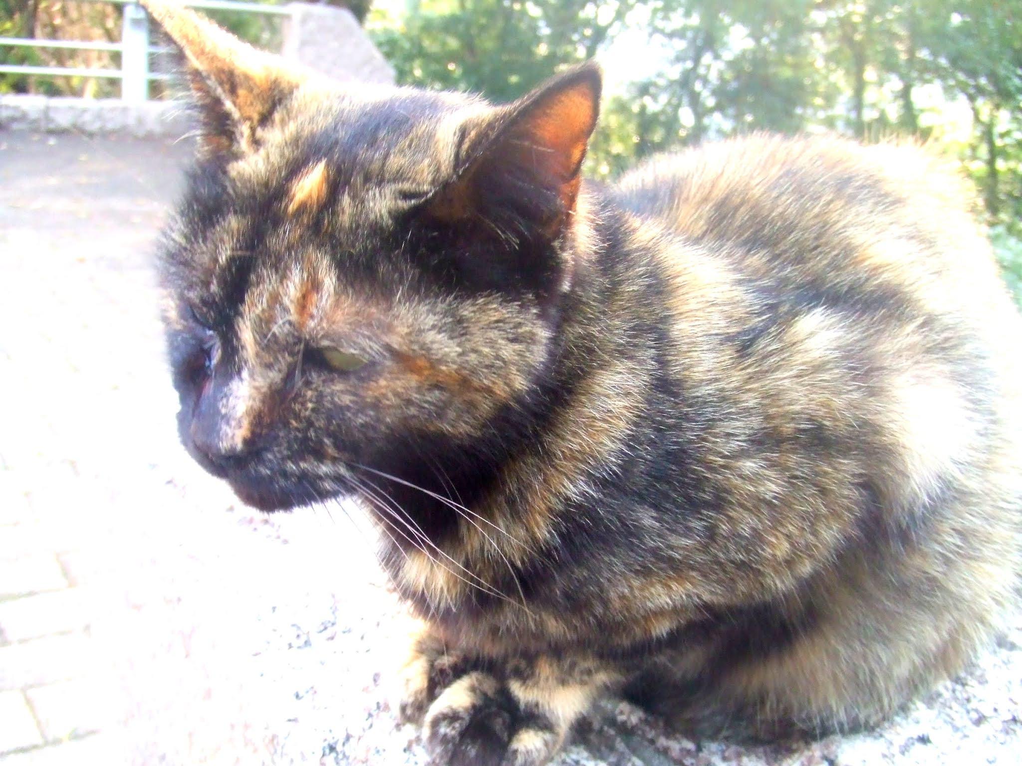 猫さんの全体の写真です。可愛いお顔のサビ猫さん。猫ブログなどにどうでしょう。