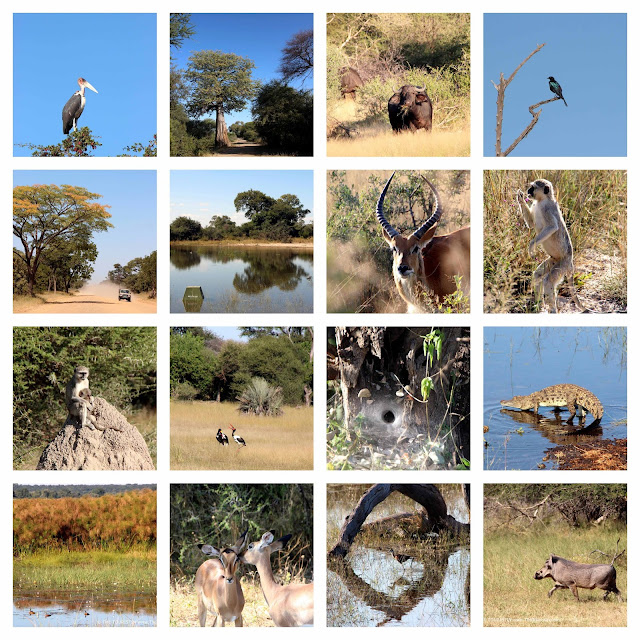 Wildlife at the Mahango Core area of the Bwabwata National Park in Namibia