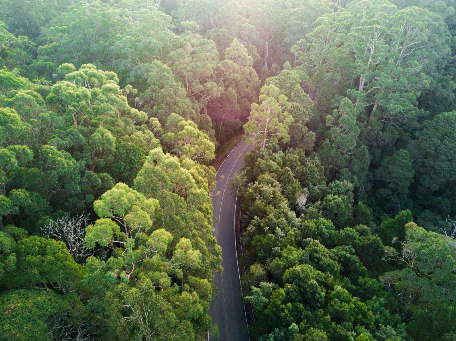 otway national park