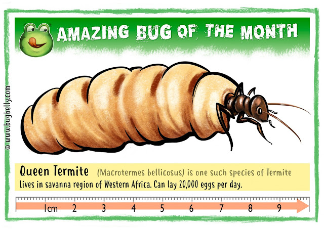 Illustration of Queen Termite on Bugbelly.com