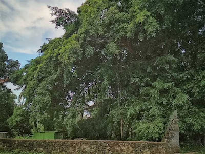 Detil langit tidak hilang walau fokus pada pohon